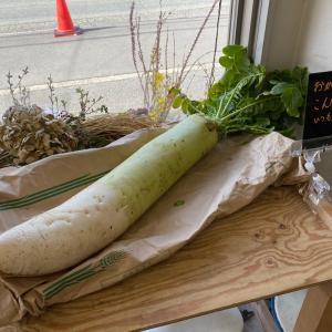 春野菜|池田美容室アールデコ