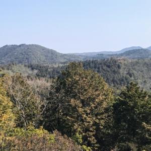 森林浴に癒される 八曽山 八曽滝・山の神・岩見山周回ルート