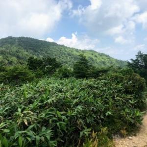 滝が連続する乙女渓谷と御嶽山の展望台 小秀山 二ノ谷~三ノ谷