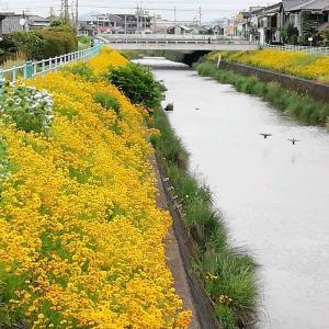 名古屋旧道散歩