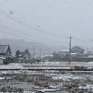 今日は冬らしく