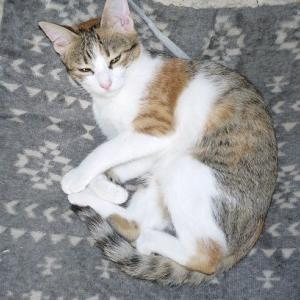子猫のアン子が忽然と消えた日 と 猫が帰るおまじない