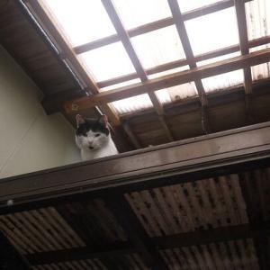 猫が帰って来ない;;