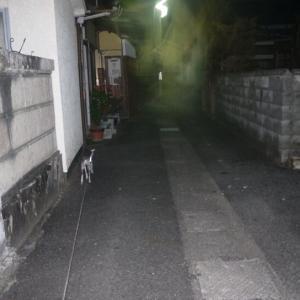 夜散歩を撮影したら何かが写ってた><