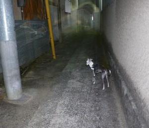 散歩を端折ってるんではないか??? と 思い出せない洋楽