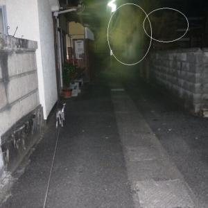 夜散歩で見た謎の黒い物体がいた場所を撮って来た。