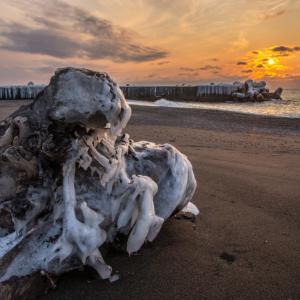 【今日の一枚】冬の波がつくる流木の怪物