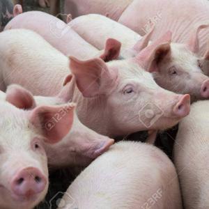 豚や鶏がかわいそう