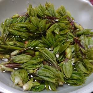 コシアブラ混ぜご飯 レシピ