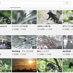ツキノワグマや野生動物の動画