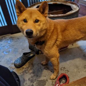 猟犬にTractive 3G犬用GPSのレビュー