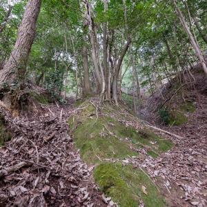 根福寺城 [2/2] 城の南西斜面に明瞭に残る巨大な畝状竪堀群