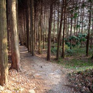 津田城 : 河内・大和・山城の国境に位置する山中の陣城跡か