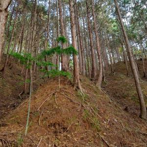 但馬 亀ヶ城 [2/2] 最大の見所である西城の畝状竪堀群へ。圧巻!