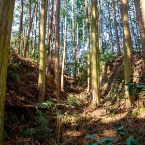 龍松山城 : 斜面に築かれた巨大堀切群が見所な紀南最大豪族 山本氏の城。