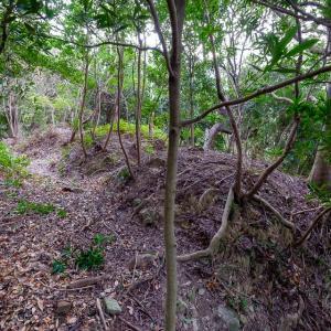 高瀬要害山城 : 城の北側に作られた畝状空堀群が最大の見所。