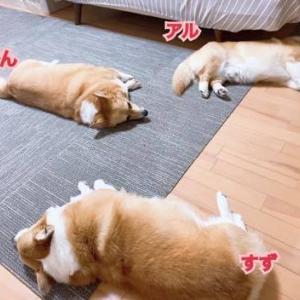 お疲れMAX♪