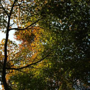色彩豊かな季節