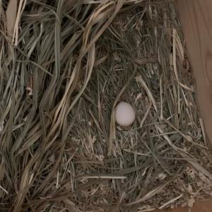 卵①@うるる&ドラミ