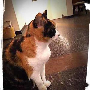 妙見石原荘の看板猫 三毛のロブー