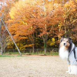 紅葉みに行こうよう2020森林公園ドッグラン編