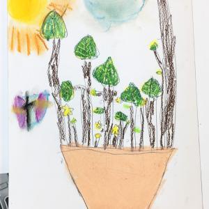 観葉植物の観察