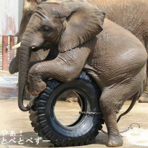 タイヤ乗りする砥愛ちゃん