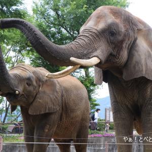 とべ動物園再開&砥愛ちゃん8歳になりました