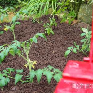 トマト畑・・・♡