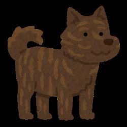 福島県の路上で発見された謎の動物が話題に「痩せた熊だろ」「いや野犬だろ」