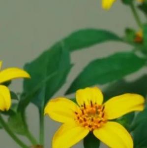 カール・リンネの花時計で使われた美しい花たち (理科クイズ7の答え)
