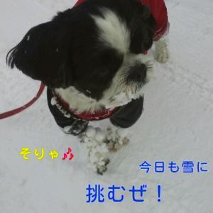 お空の冬物語始めました(❤^^❤)♡♡゜(❤^^❤)♡♡゜