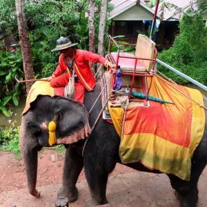 Chang Puak Campで「ゾウ」に乗る