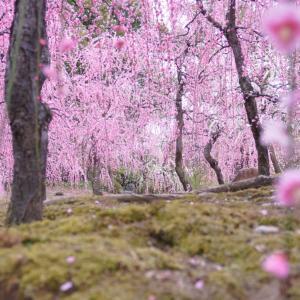 『春よ、来い』 嵐の大事な旅立ちに