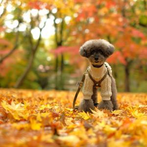 秋色にピッタリ!素敵なお洋服を頂きました♪
