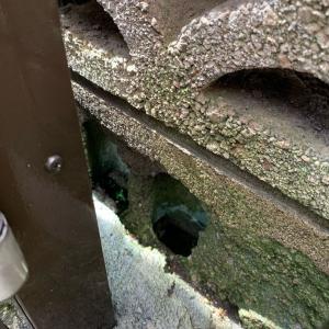 ブロック塀のデカい穴をセメントで埋めてみた