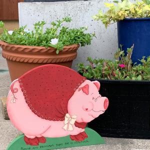 豚さんで、目標達成‼