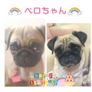 ペロちゃん☆11歳のお誕生日♡