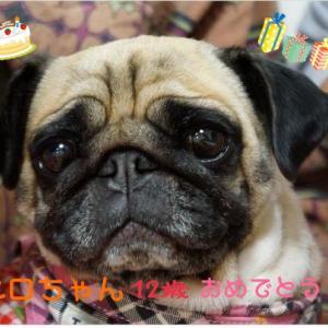 ペロちゃん☆12歳のお誕生日♡
