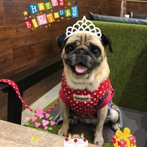 ペロちゃん☆10歳のお誕生日♡