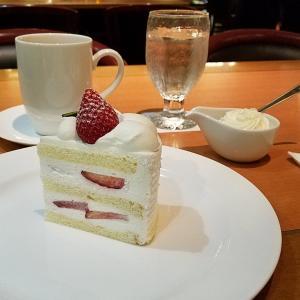 11/22 服部百音さん ヴァイオリンリサイタル (1)  チケットを忘れてしまった ニューオータニのケーキが美味しい