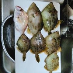 10月16日(水)、南知多乗合船釣り~のキス投げ釣り