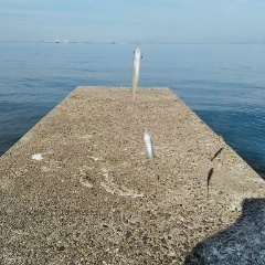 10月28日(月)、南知多でキス投げ釣り