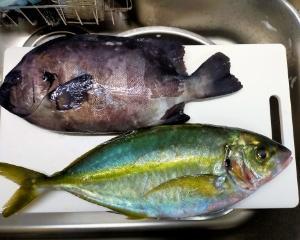 高級魚を熟成刺身で食す(´∀`*)ウフフ