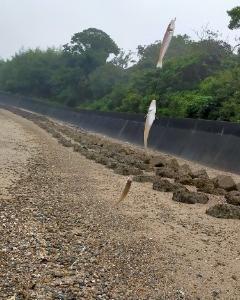 9月16日(水)、南知多にてキス投げ釣り &超ムカついた
