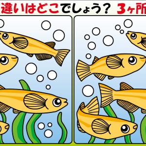 【間違い探しイラスト】メダカ #1