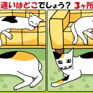 #11 猫のイラストで間違い探し
