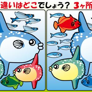 #25 お魚のイラストで【間違い探し】
