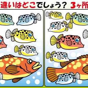 #26 お魚のイラストで【間違い探し】