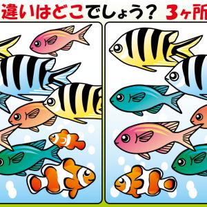 #27 お魚のイラストで【間違い探し】
